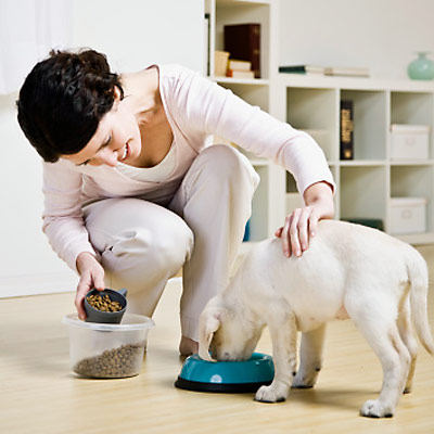 Pet Health and Diet