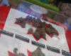 The Canadian Government Calls On Citizens For Help With New Marijuana Laws